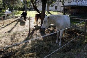Imatge dels cavalls de la Fundació Manreana