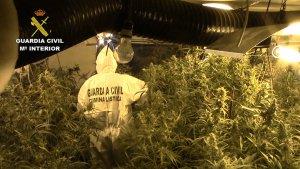 Imatge de la plantació interior de marihuana localitzada per la Guàrdia Civil