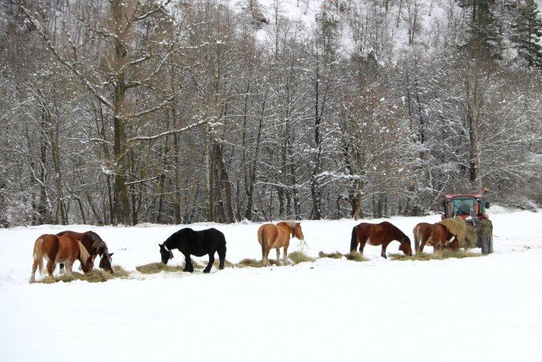 Cavalls a la neu