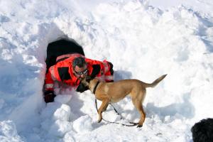 Moment en el que un gos de rescat a localitzat una persona amagada sota la neu