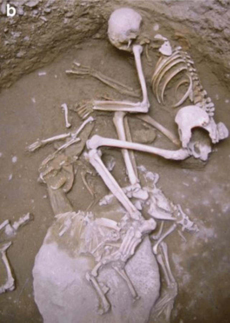 Enterrament d'una dona i dos guineus, al jaciment de Minferri