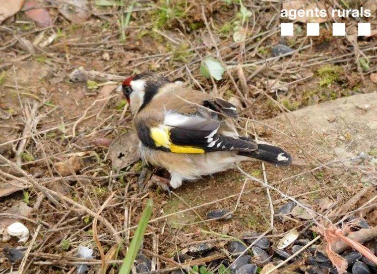 Imatge d'un ocell