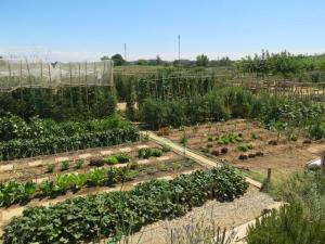 Imatge dels horts de Rufea