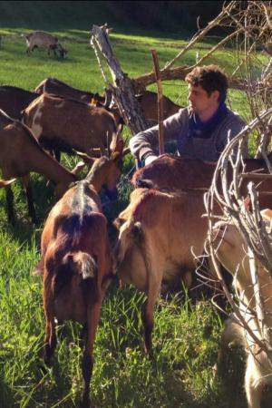 Una pastor amb un ramat de cabres