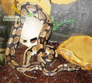 Imatge d'una de les serps