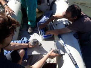 Pla tancat on es pot veure un moment del monitoratge de bernat pescaire