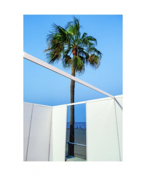 Una palmera fotografiada per Toni Prim
