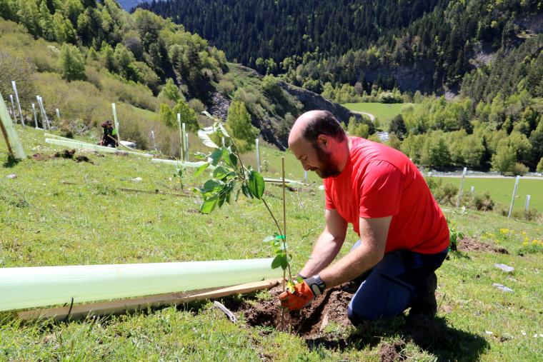 Primer pla d'un jove plantant un pomer a la vall d'Isil
