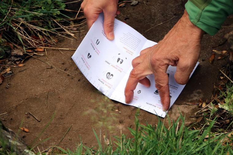 Primer pla d'una mà amb un plànol identificant una petjada d'animal