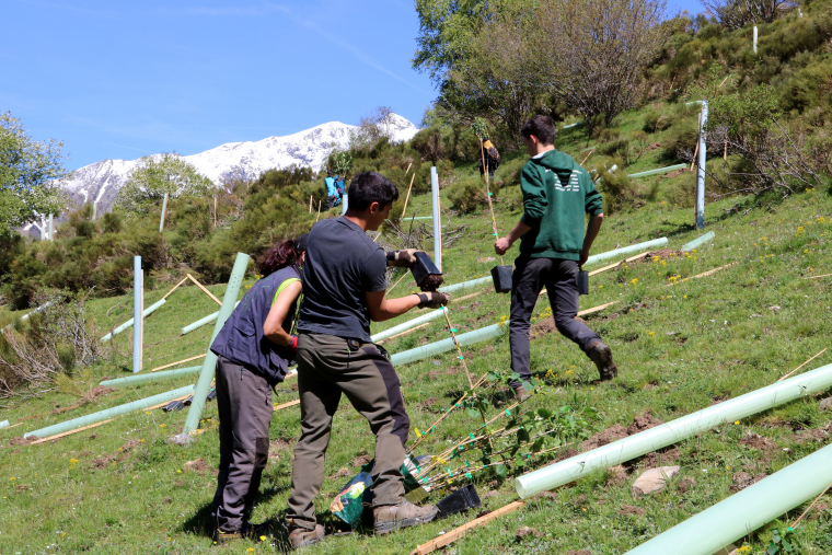 Tres joves plantant fruiters a a vall d'Isil
