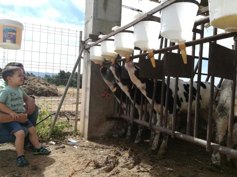 Una granja de vedells a Benvinguts a Pagès