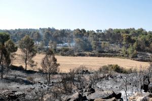 Pla general de la zona afectada per l'incendi al terme municipal de Maials