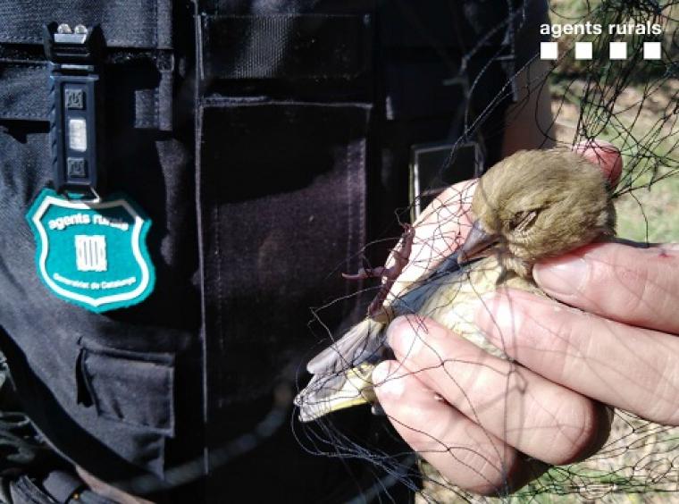Un dels ocells afectats