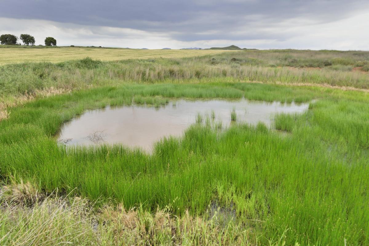 Pla general on es pot veure una de les basses recuperades als secans de la Noguera