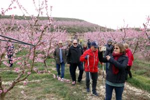 Alguns dels primers visitants als camps de presseguers florits a Aitona