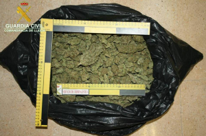 Imatge de la marihuana intervinguda