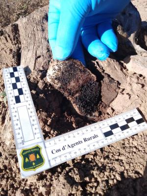 Imatge del verí localitzat pels Agents Rurals a l'Àrea de Caça de la Donzell