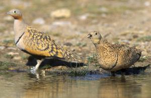 Pla mitjà on es poden veure dos ocells en una de les basses recuperades