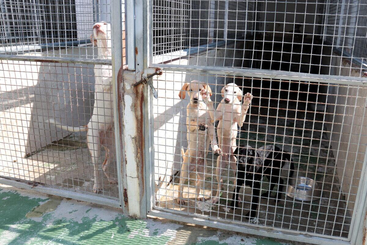 Alguns dels gossos que es troben al centre d'acollida d'animals de companyia de Lleida