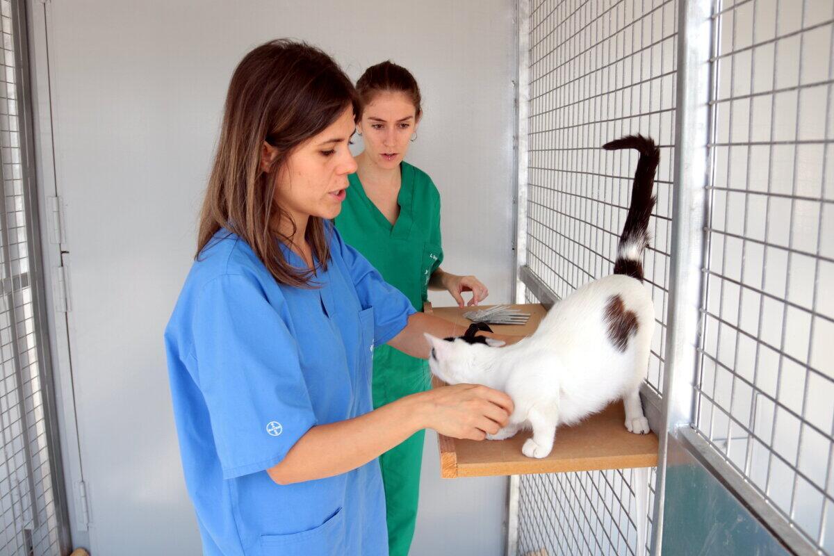 La veterinària del centre d'acollida d'animals de companyia de Lleida