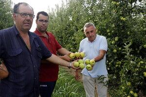 Dos pagesos de Vila-sana i Pere Roqué mostren les pomes afectades per la pedregada.