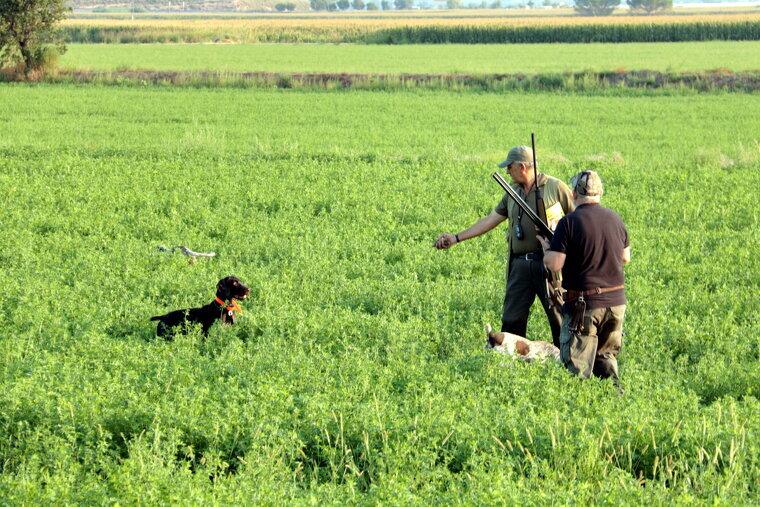 Dos caçadors després de recollir una guatlla que els ha portat el gos
