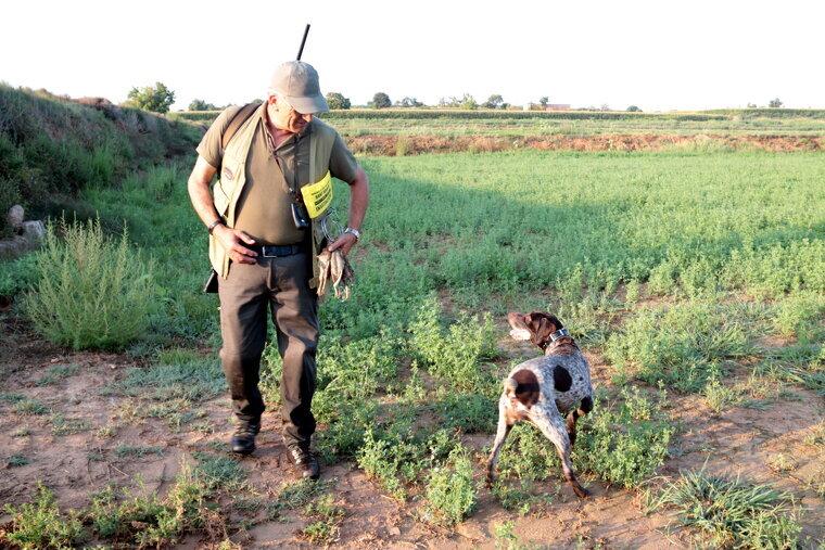 Un caçador mostra tres guatlles que ha abatut a Bell-lloc d'Urgell