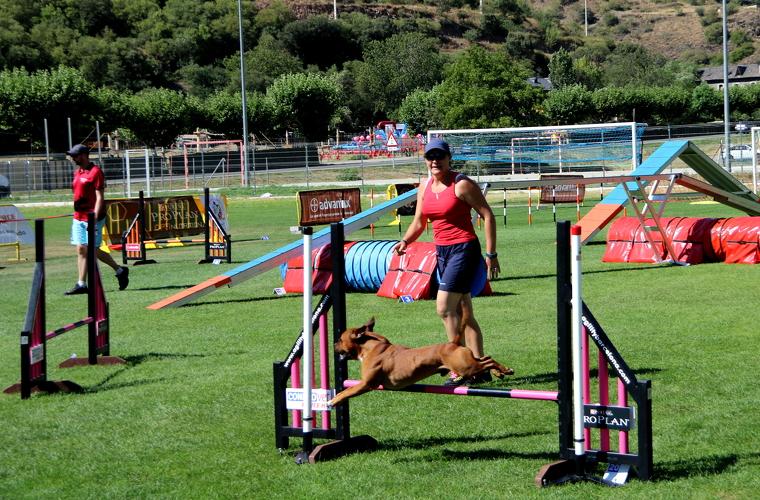 Un gos que participa a la Rialp Summer Agility saltant una tanca