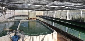 Imatge de les piscines de la granja experimental d'Almenar