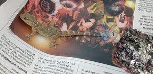 Imatge del dragó
