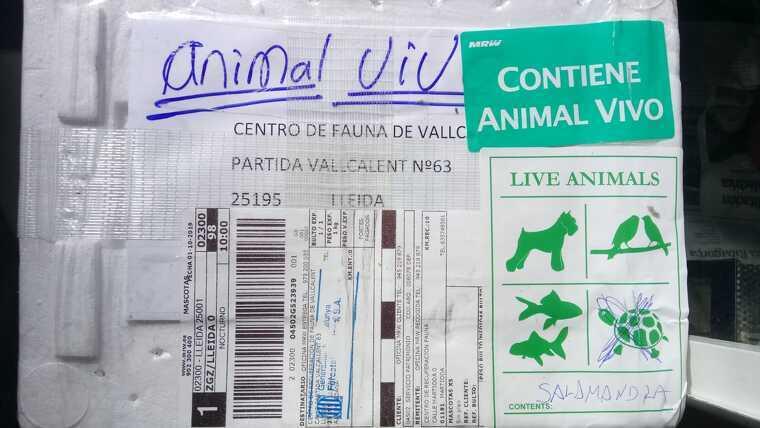 Imatge del paquet en el qual es va enviar el dragó