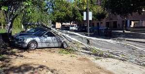 La caiguda d'arbres ha ocasionat diversos danys.