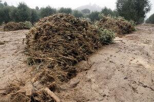 Pla obert on es pot veure un camp d'oliveres afectat per la llevantada a l'Albi