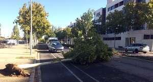 Tallat un carril a l'avinguda Onze de Setembre per la caiguda d'un arbre.
