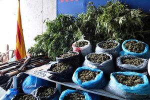Pla mitjà de la marihuana, diners i escopetes, comissats pels Mossos d'Esquadra