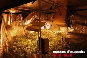 Pla general de la plantació de marihuana 'indoor' que els Mossos d'Esquadra