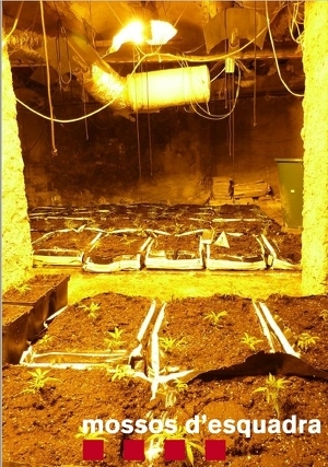 Pla general de la plantació de marihuana localitzada pels Mossos d'Esquadra en el soterrani