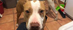 Primer pla d'un dels gossos intervinguts a les Borges Blanques