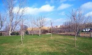 Imatge d'alguns dels nous arbres plantats a Lleida