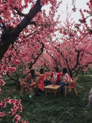 Pla obert d'una de les activitats en el marc de la campanya de la floració