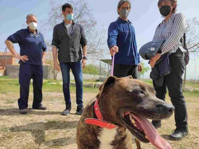 Imatge d'un gos del Refugi dels Peluts de Lleida