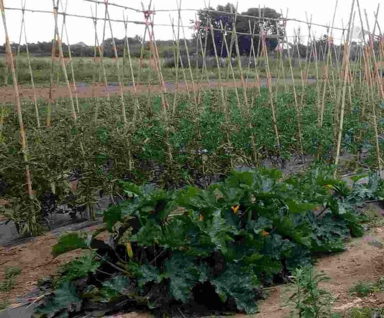 Imatge d'un hort de Rufea