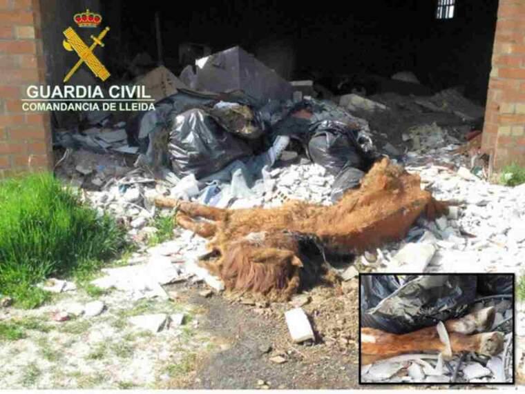 Pla general del cadàver d'un cavall abandonat a Lleida