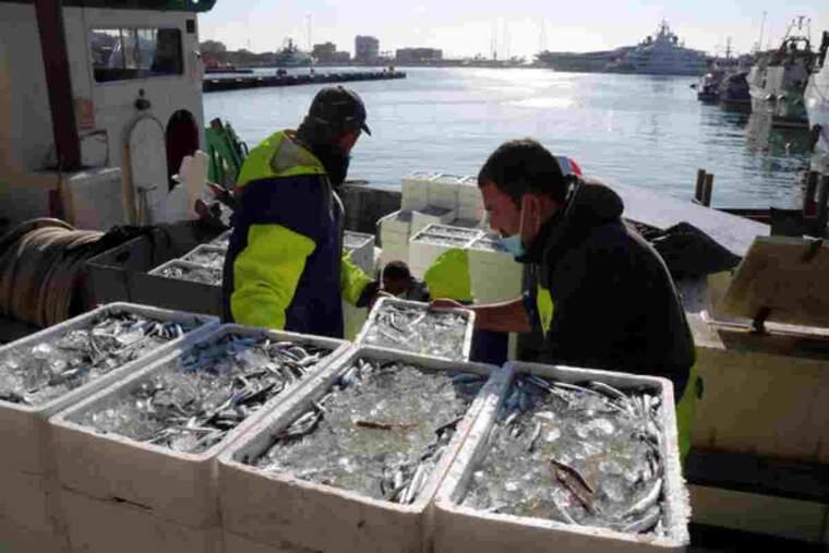 Pla obert picat d'una pila de caixes de seitó vora uns mariners que descarreguen peix al barri del Serrallo de Tarragona