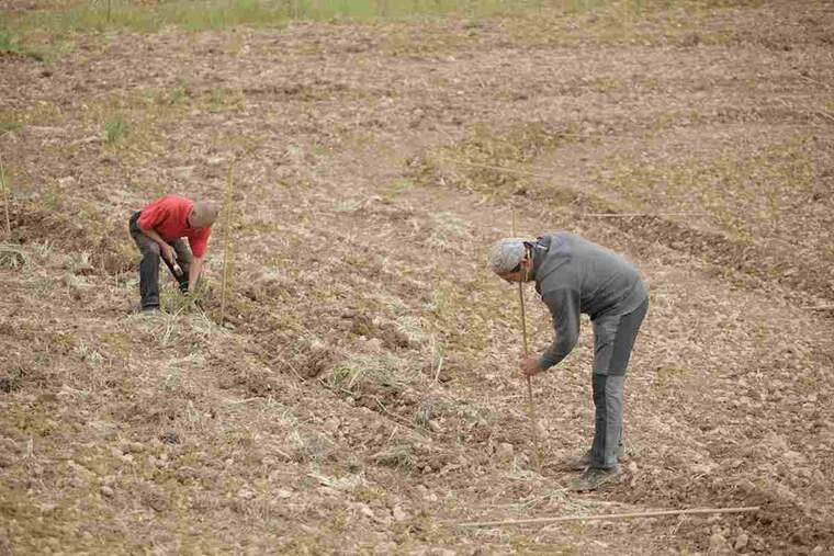 Imatge d'agricultors
