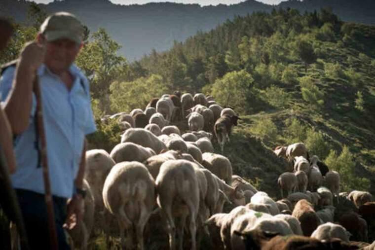Pla de detall d'un pastor que apareix al documental 'El No a l'Os'