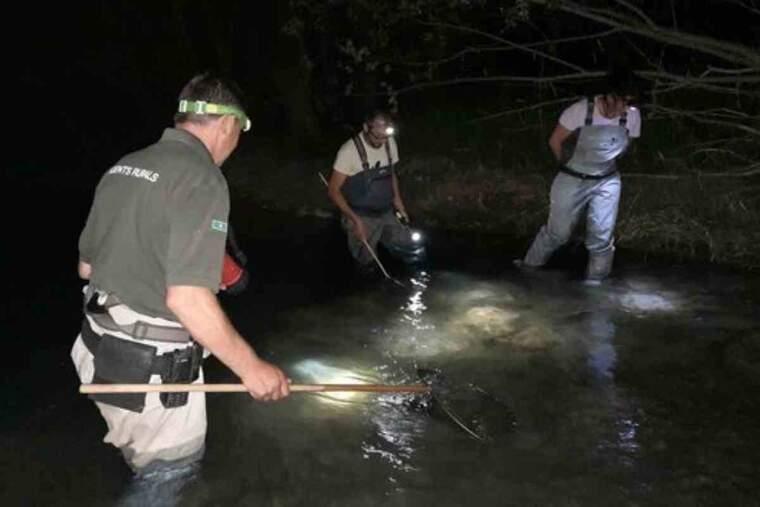 Pla general del cens nocturn organitzat per confirmar la presència de cranc de riu autòcton a Collegats