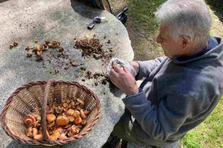 Pla general d'un home netejant els bolets a Campelles
