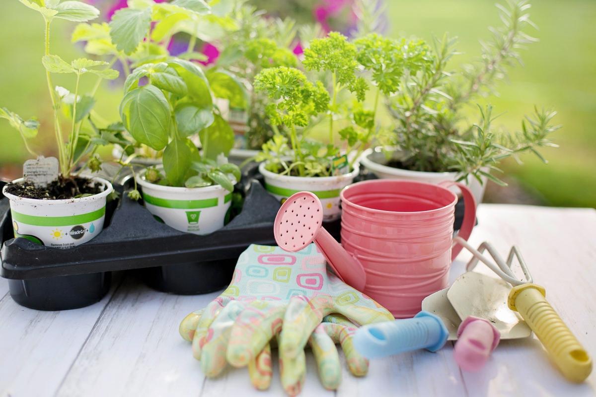 Resultado de imagen para tips para el cuidado de tus plantas