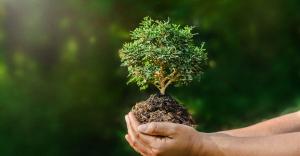 concejos para cuidar el medio ambiente